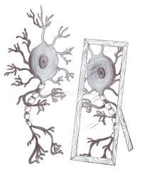 mirror-neuron-25595789
